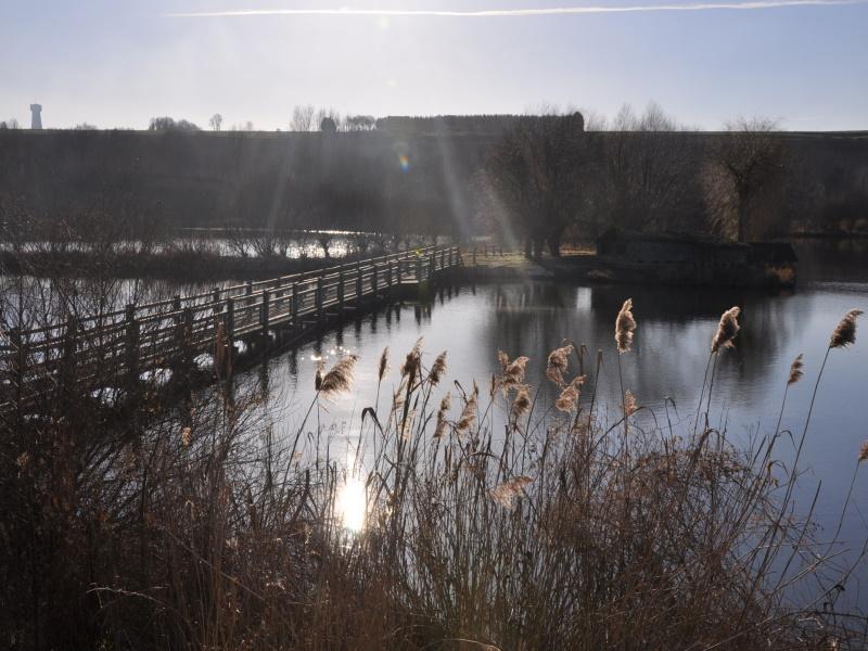 Marais des cavins - Bourdon